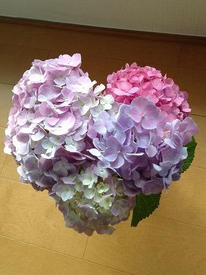 2014紫陽花