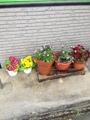 玄関前の花2